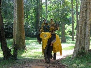 Explore Angkor, Cambodia by Elephant